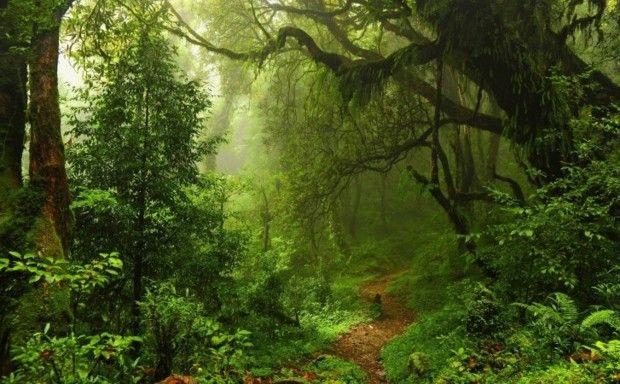 Farby pralesa a džungle | Bonami