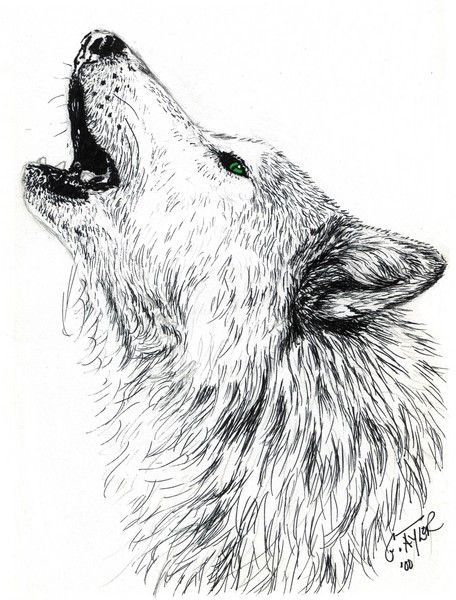 Black Wolf Howling Drawing Howling Wolf by...