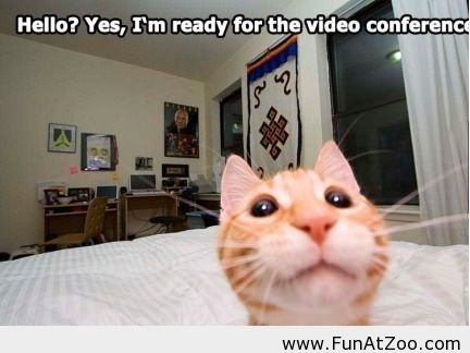 Cat Is Ready For Video Conference Funny Picture Funny Cat Pictures Funny Cat Memes Funny Cats