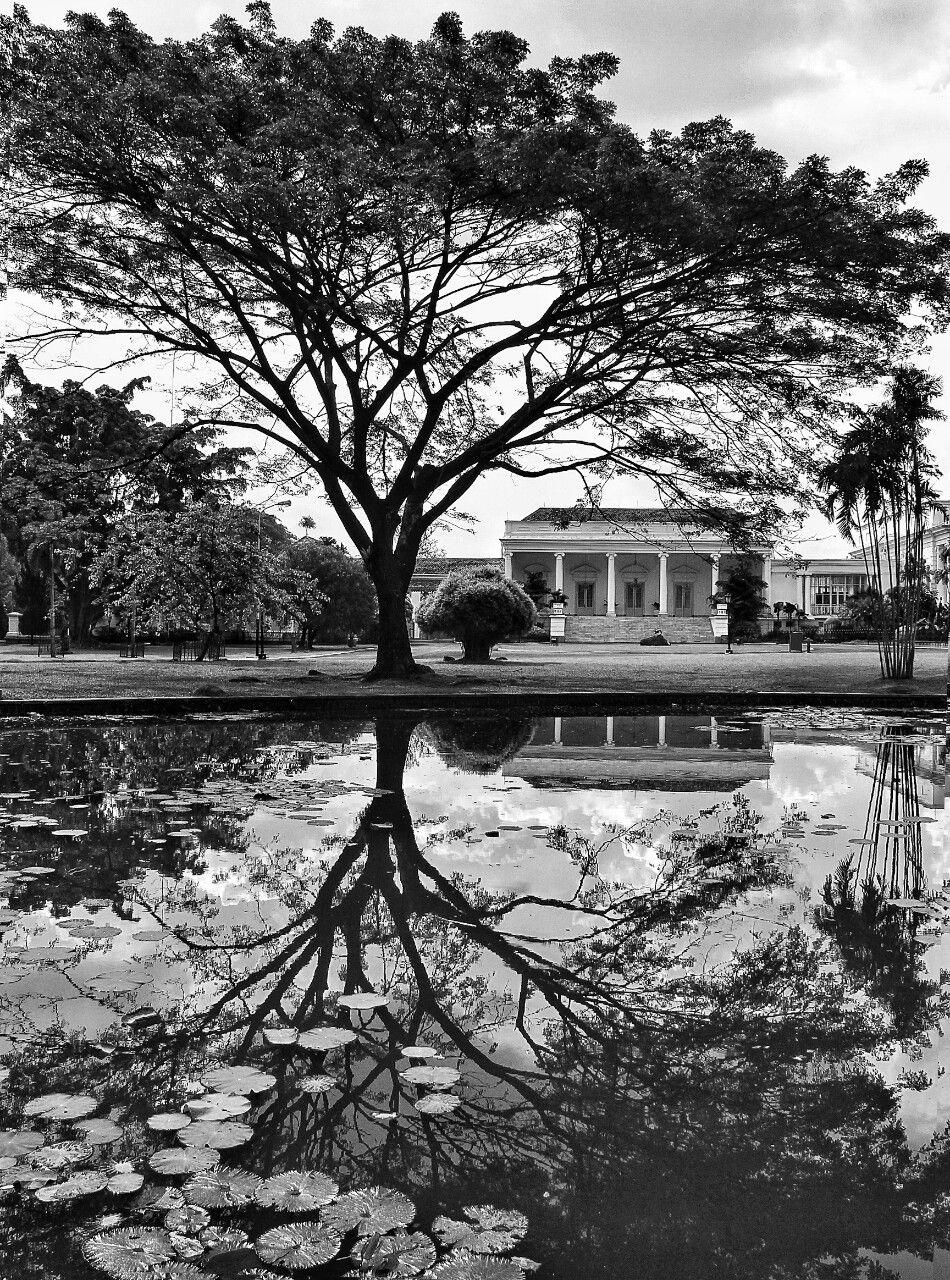 JavaImages Of Bogor Botanical Gardens Dutch east indies