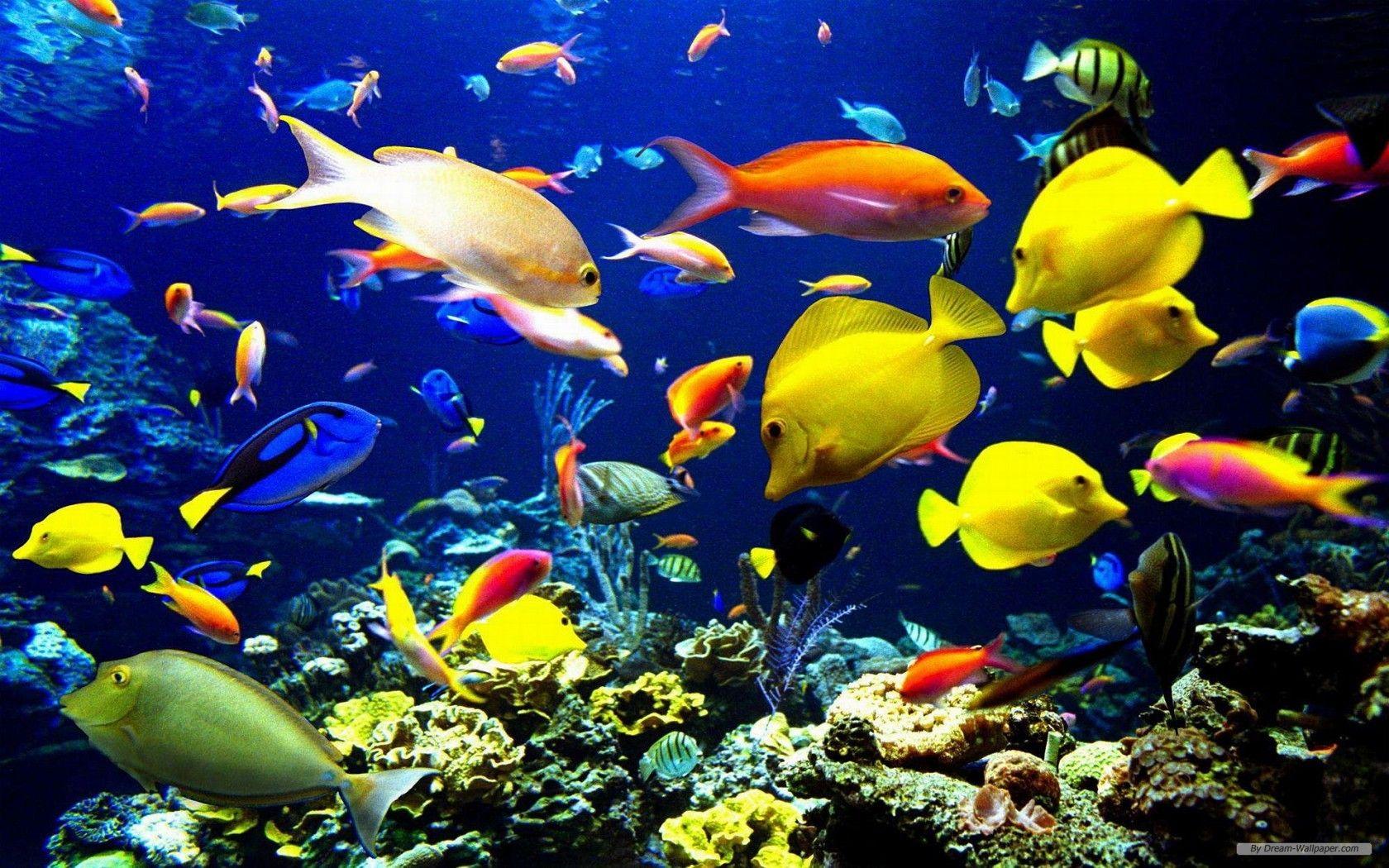ocean life background 1 oceans pinterest sea marine life and