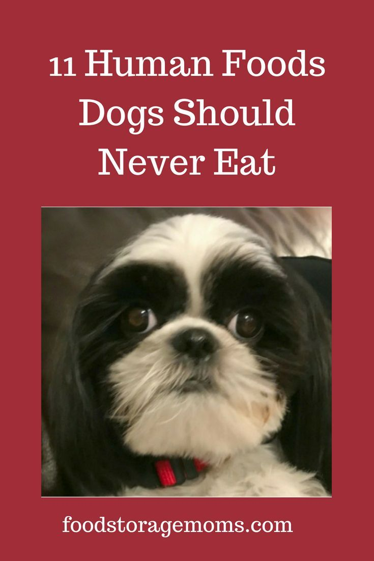 11 human foods dogs should never eat human food dogs eat