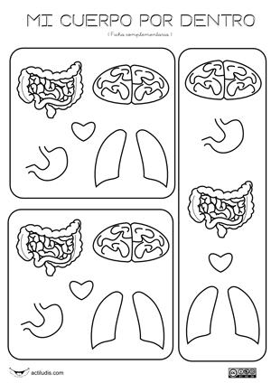 Dos fichas (niño y niña) y otra más con cerebro, corazón, pulmones ...