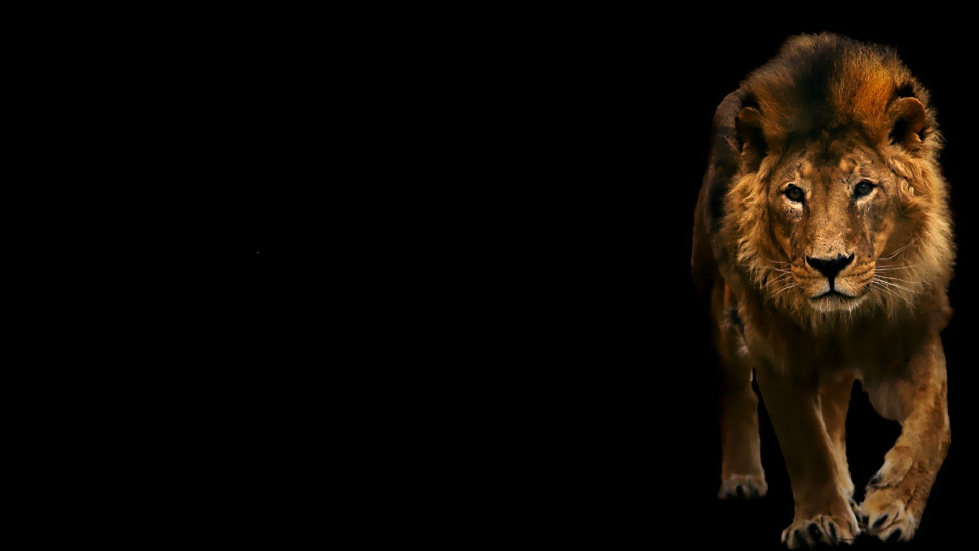 Leo Is Dark The Background Hd Wallpapers