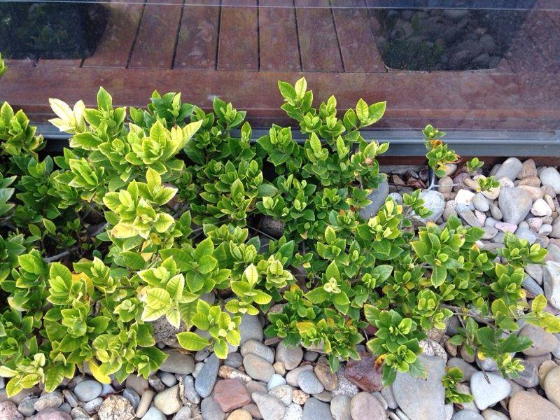 Free plant identification easy plants to grow plants