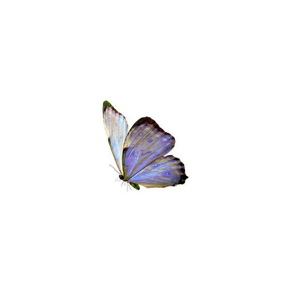 Inshv Albom Lady Catherine Na Yandeks Fotkah Butterfly Butterfly Art Butterfly Wallpaper