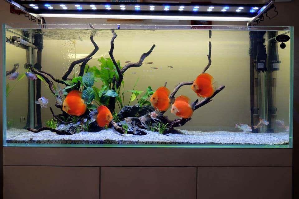 Aquarium Fish Tank Landscape Decor Bright Silicone Soft Coral Plant Ornament