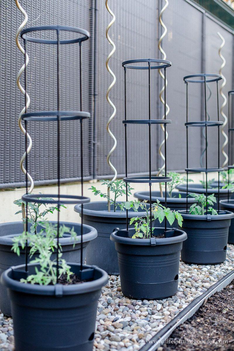 Tipps für den Tomatenanbau in Kübeln und meine neuen Tomatentöpfe - Life Is Full Of Goodies