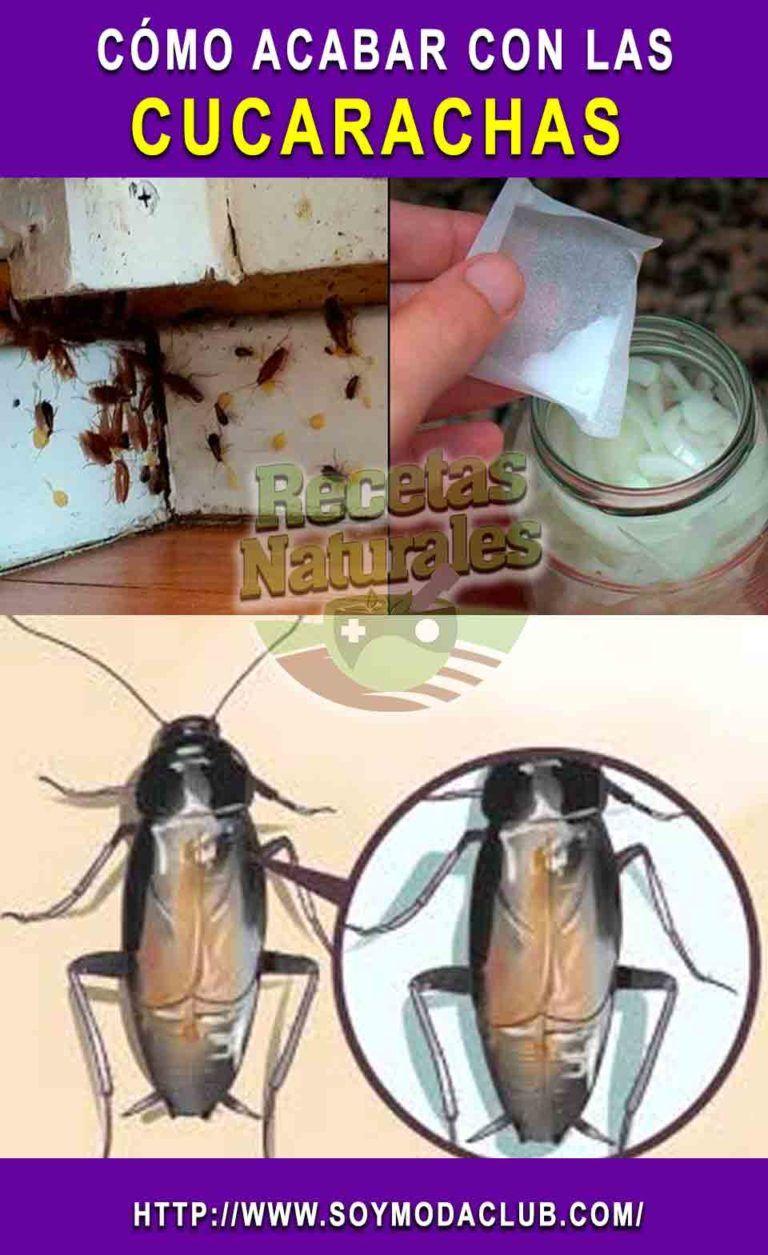 Como Acabar Con Las Hormigas En Mi Cocina Pin En Pola