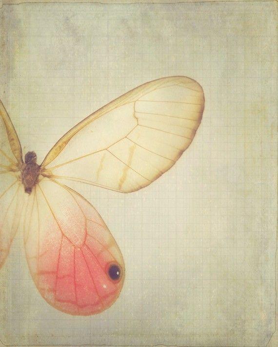 Wings - https://www.etsy.com/listing/70398832/wings-8-x-10-fine-art-photograph-dreamy?utm_source=Pinterest&utm_medium=PageTools&utm_campaign=Share