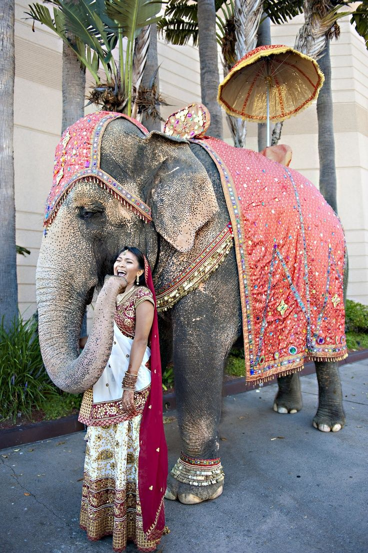 This Indian bride has a laugh with her elephant before the wedding reception. Elephants are important symbols for Hindu weddings.