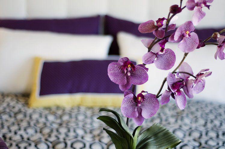 Jezeli Masz W Domu Storczyki To Wykorzystaj Ten Trik Beautiful Orchids Orchids Color Of The Year