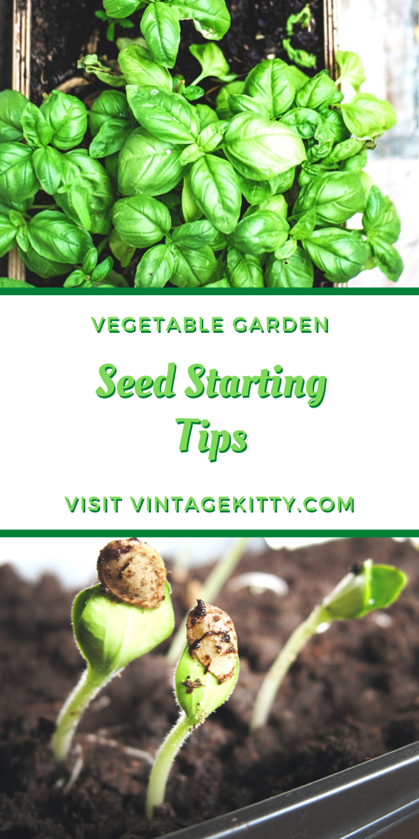 Seed Starting Tips for Heirloom Vegetable Gardeners   Vintage Kitty -  The arrival of spring means its time to start working on your vegetable and herb gardens. Follow th - #CompanionPlanting #gardeners #heirloom #kitty #OrganicGardening #Permaculture #Seed #SeedStarting #starting #Tips #vegetable #vintage