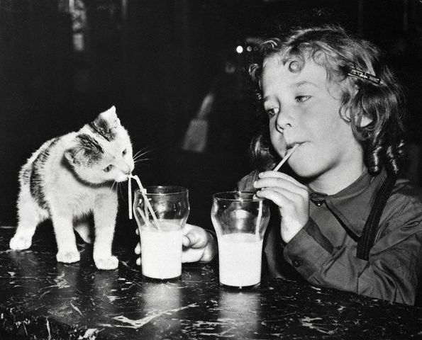 Bettmann Girl And Kitten Drinking Milk 1949 Cat Drinking Cat Pics Vintage Cat