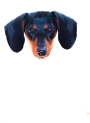 Dogs Awesome PicturesStore entirely devoted to Teckel and their life. We will help you finding toys, fashion glass, food, jewel for dog sleeping mats and pee pads, toys, chewable ++ Search for it You will Find It !www.goteckel.com