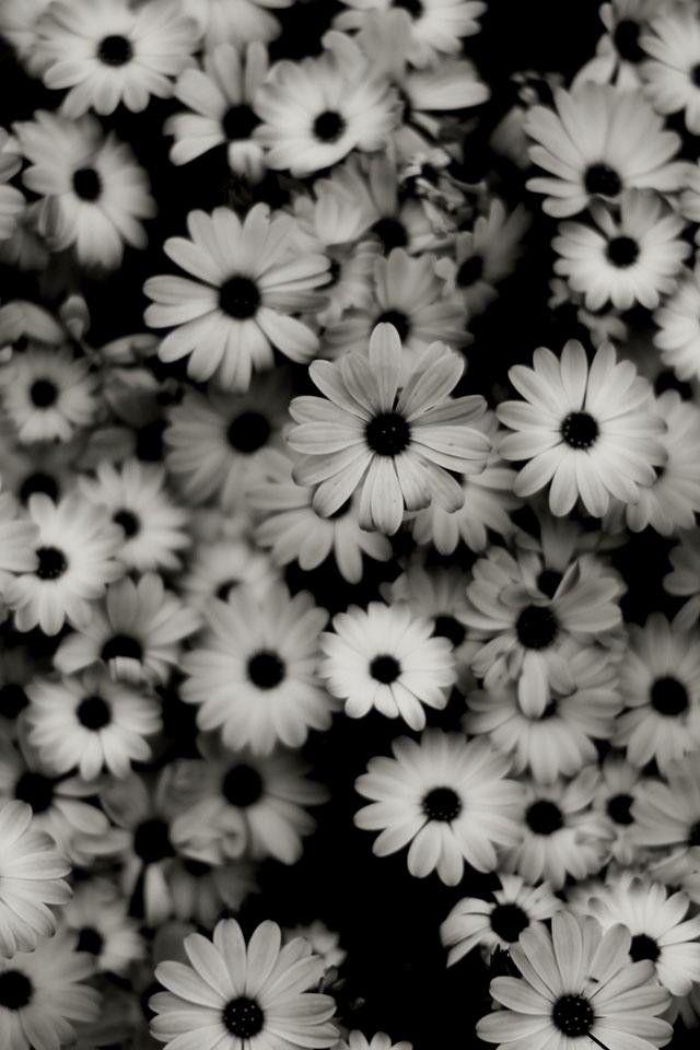 Flores Preto E Branco Para Iphone 4 E 4s Wallpaper Iphone