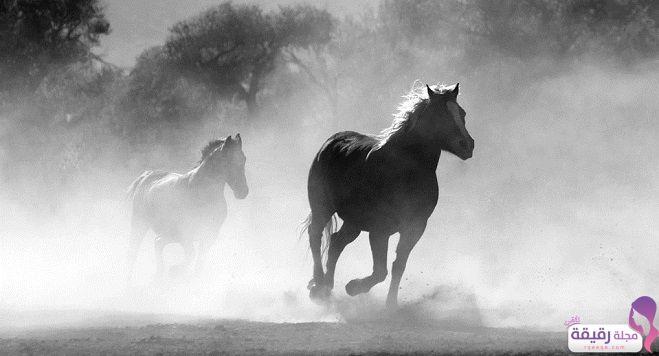 تفسير حلم الحصان البني في المنام لابن سيرين وتوضيح معنى الفرس في الحلم Of Mice And Men Online Art Classes Horse Life