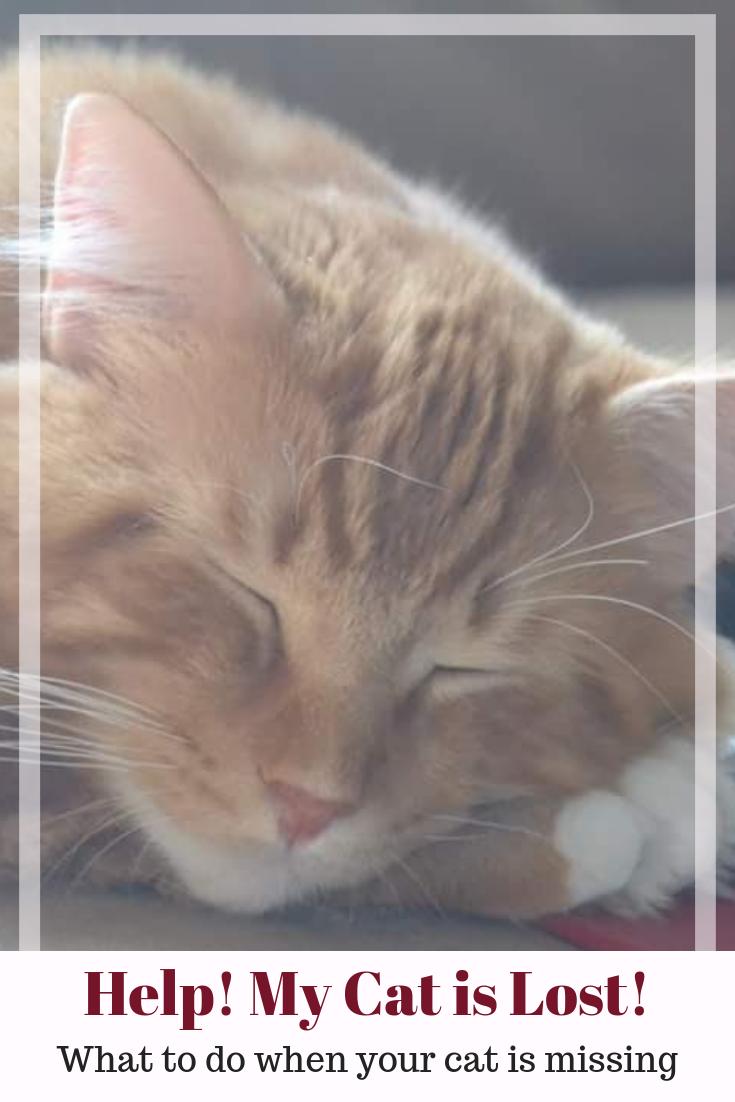What Do You Do If You Find A Sick Kitten Catvills Sick Kitten Sick Cat Cat Health