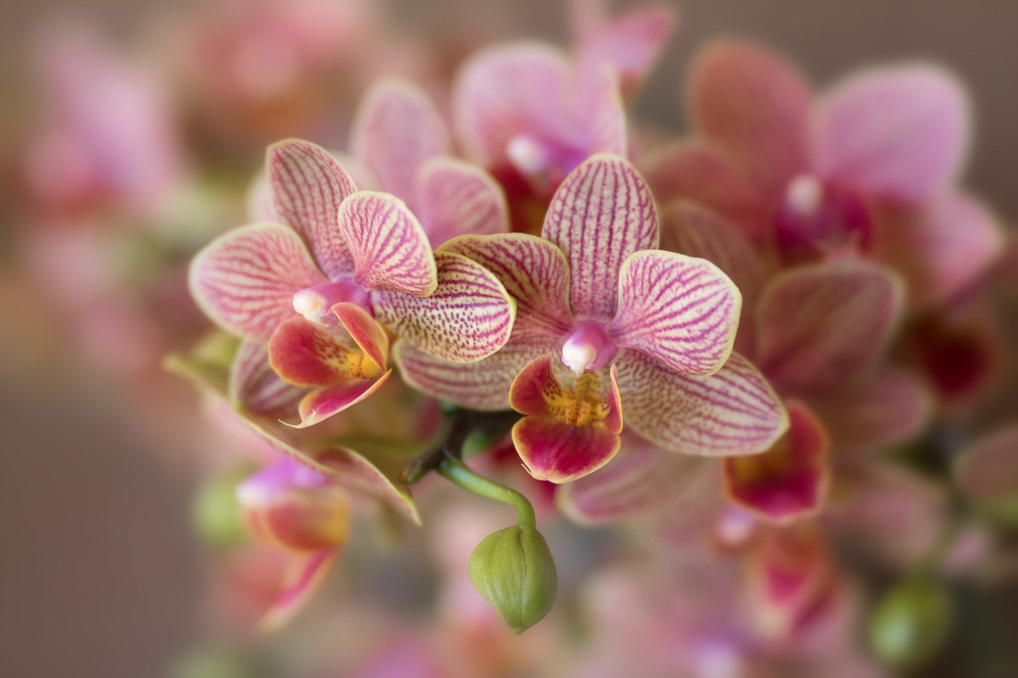 Flower Photography Capturing Stunning Orchid Photos In 2020 Flowers Photography Orchid Photo Orchids