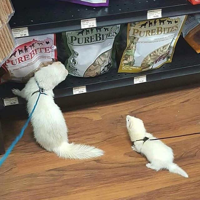 Cutecustomeralert Teddy And Daryl Are The Newest Cutecustomeralerts From Pet Valu Ephrata Pa We Loved Helping These Two Fin Pets Instagram Posts Cute