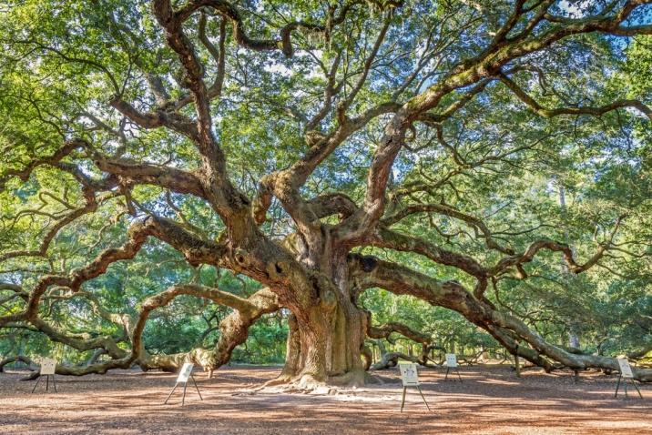 Cavin Harper Speaks At Live Oaks Center Pawley S Island Pass Oak Tree Silhouette Tree Silhouette Clip Art