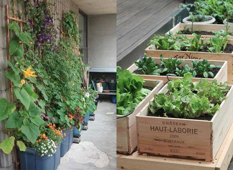 Tuinieren zonder tuin garden pinterest for Groenten tuin