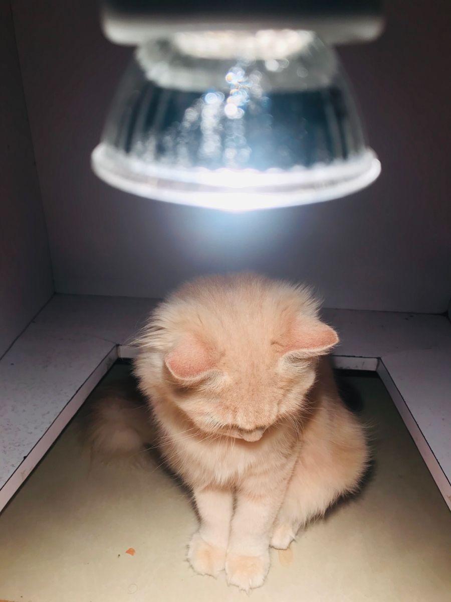 #persian #kitten #cute #persiancat #persiankitten