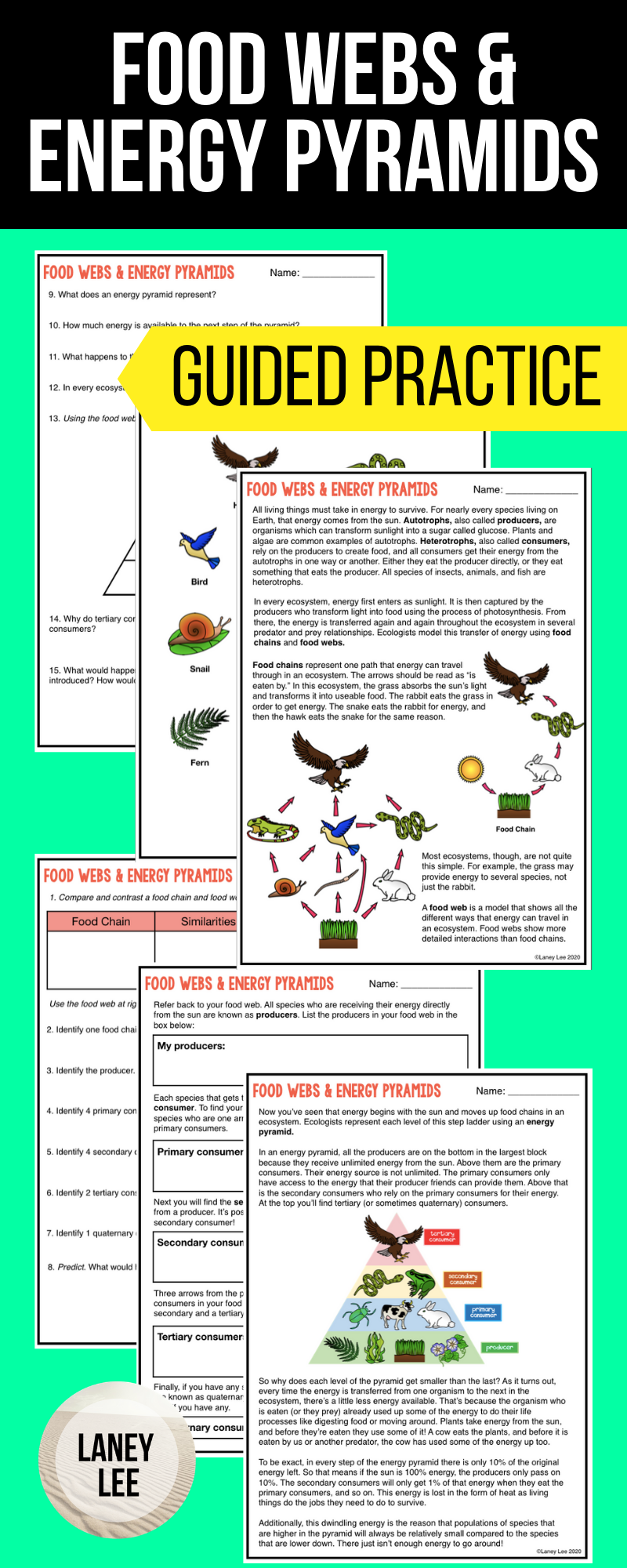 Food Chains Food Webs Energy Pyramids Guided Reading Worksheets Guided Reading Worksheets Reading Worksheets Middle School Science Resources [ 2000 x 800 Pixel ]