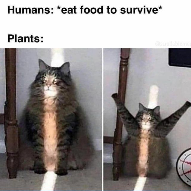 22 Brand New Memes With A Real Sense Of Humor In 2020 Funny Animal Memes Funny Relatable Memes Animal Memes