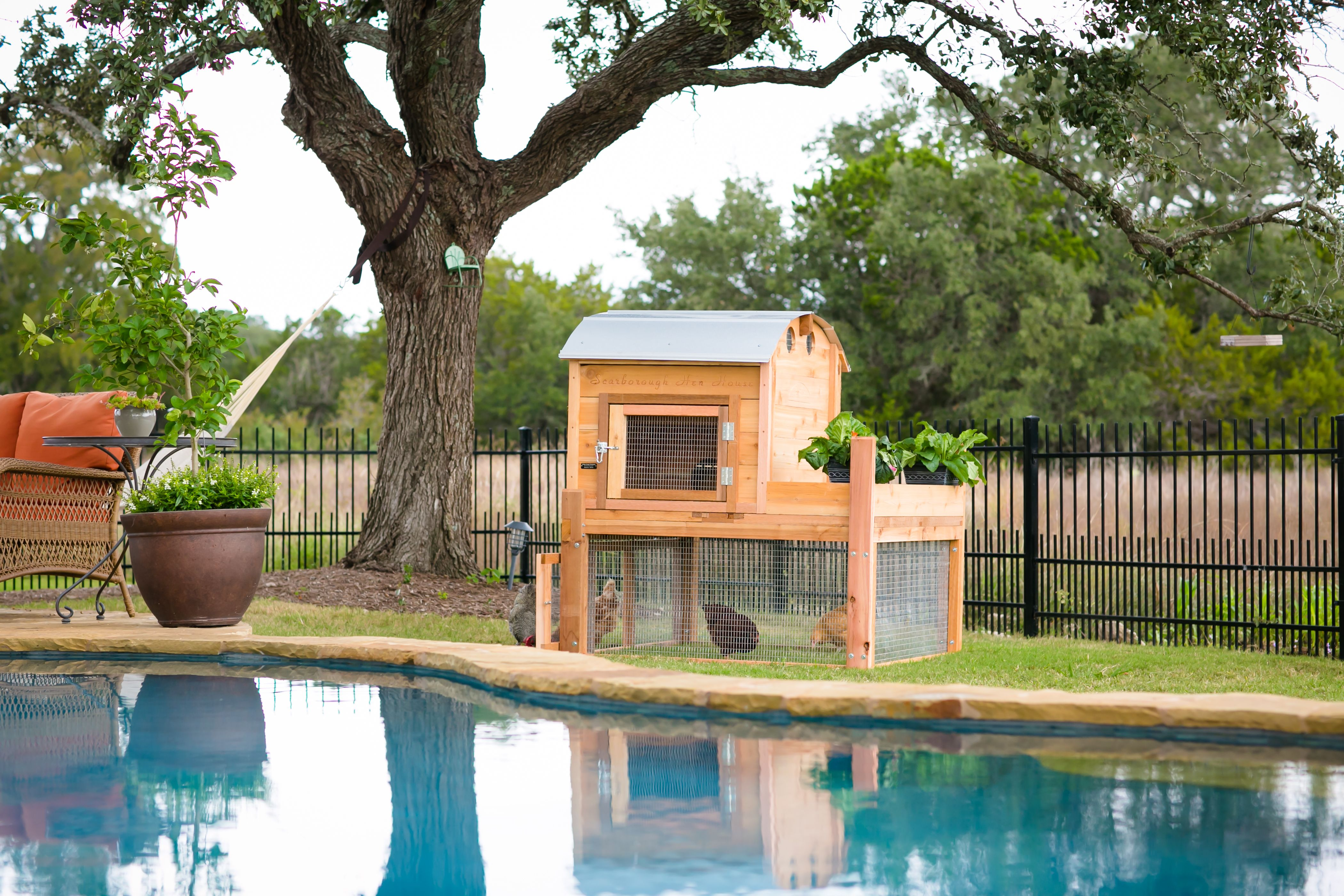 Enjoy your chickens while floating in the pool!