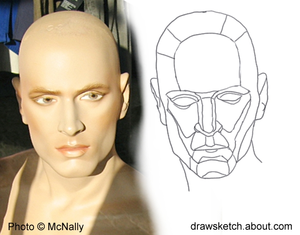Line Drawing Of Human Face : Line drawing essential tips for beginners draw
