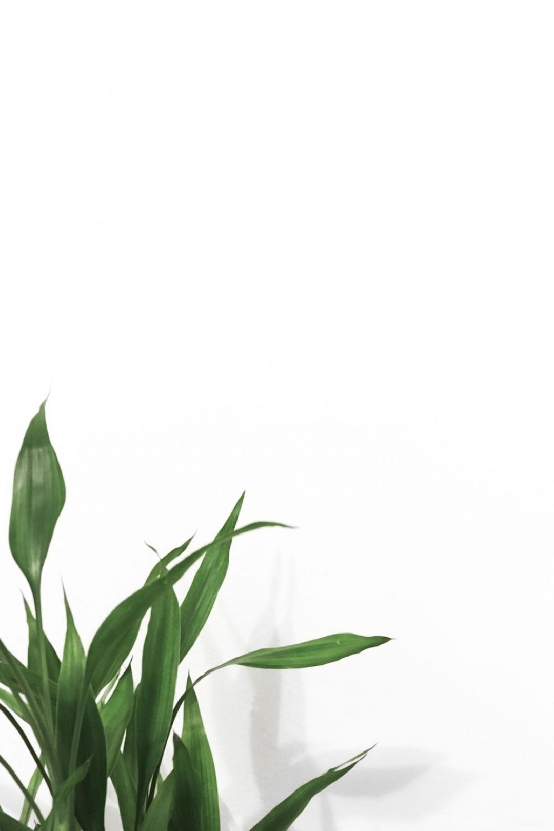 Minimal Android Iphone Desktop Hd Backgrounds Wallpapers 1080p 4k 127069 Hdwallpapers And Flower Background Wallpaper Plant Wallpaper Green Photo