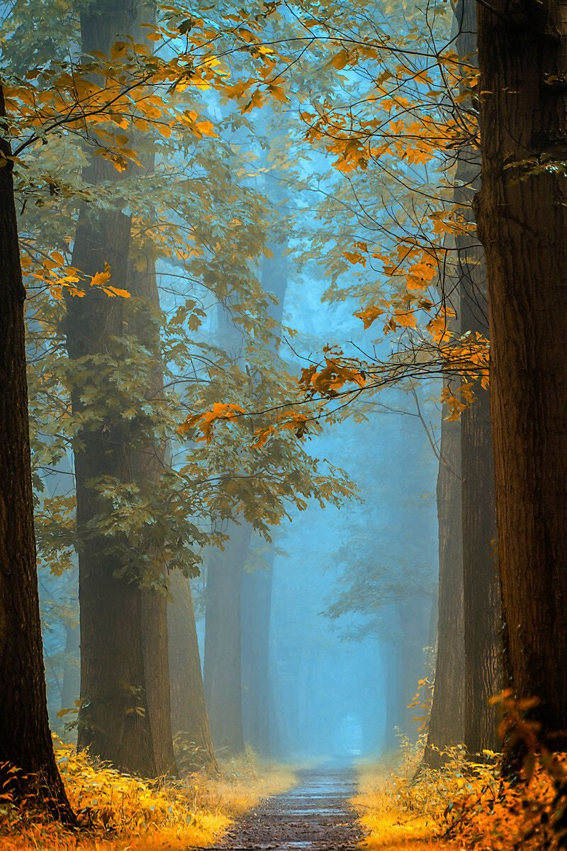 Earthly Enchantment Photo is part of Gorgeous scenery - Everything is magical when you see it with your heart