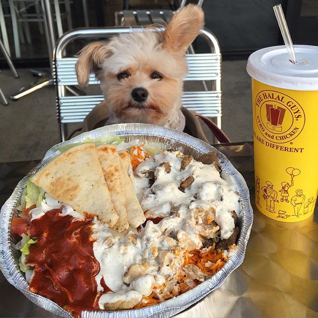 A lil concerned with the amount of spicy red sauce - at the Halal Guys in Long Beach.