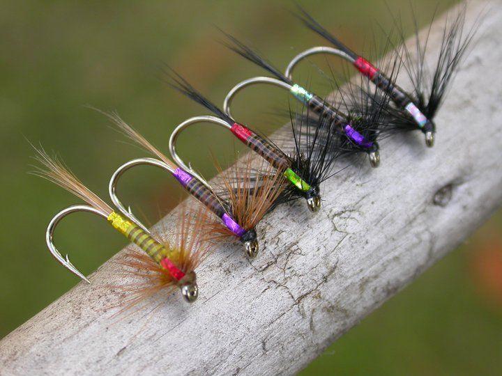 Galeria de moscas: Foto