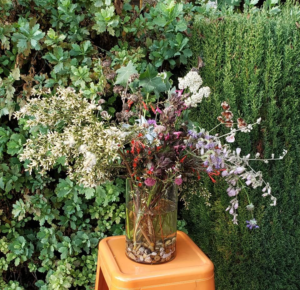 Pin By Carrie Levin On Garden Plants Garden