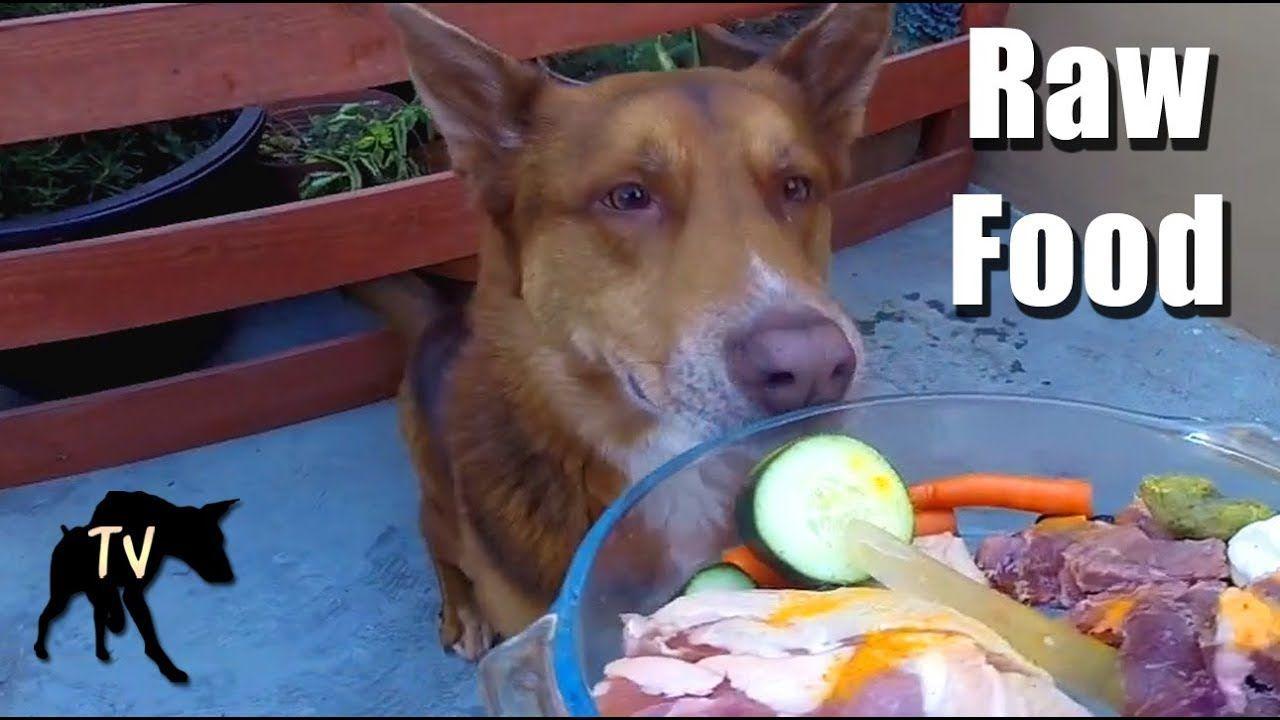 Australian Kelpie Eating Barf Diet Raw Feeding Vlog Diet Dog