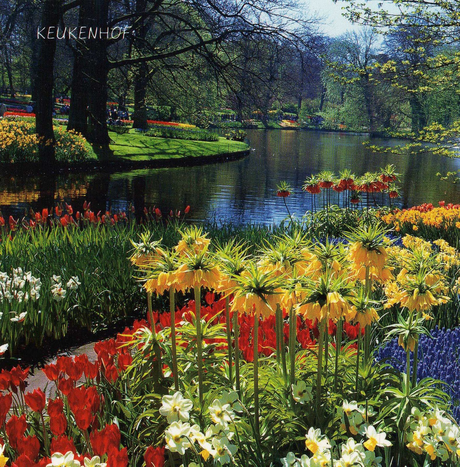 Crown imperials most beautiful gardens one of the most for Beautiful flower garden pictures