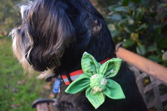 Birds in Green Collar Flower Dog and Cat Over the Collar
