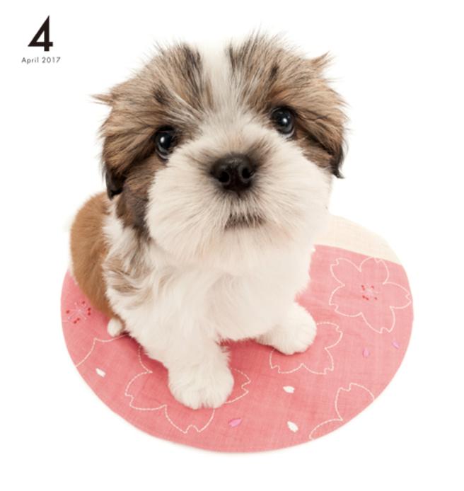 Artlist Collection The Dog Shih Tzu Calendar Artlist Collection