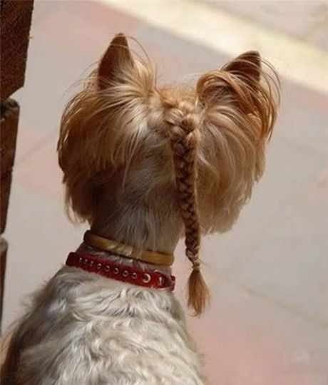 New Style Cute Dog Pictures Yorkie Haircuts Crazy Dog