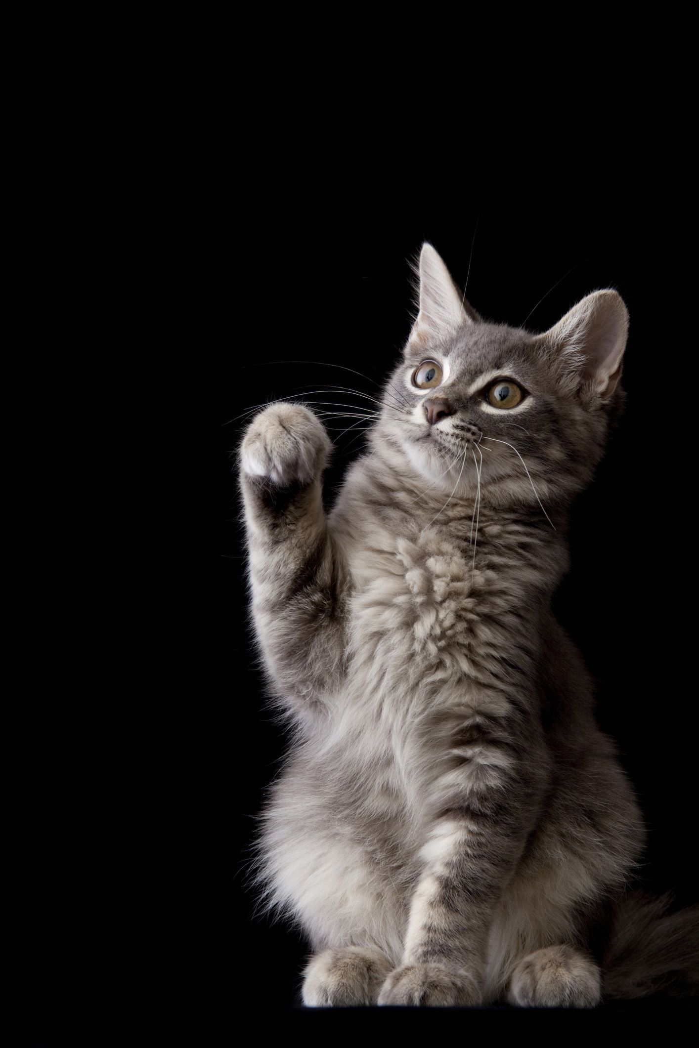 These Cute Cat Names Will Inspire Your New Friend's