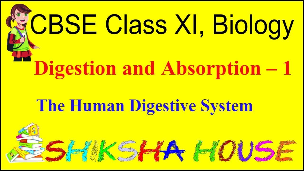 CBSE Class 11 Biology, Digestion and Absorption - 1, The ...