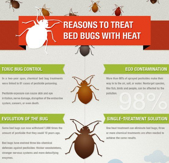 Reasons To Treat Bed Bugs With Heat Bed Bugs Treatment Pest