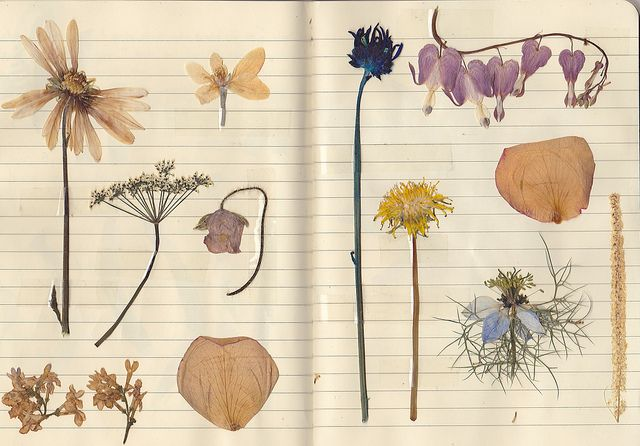 pressed flowers. I haven't done this since I was a child; they're lovely, aren't they?