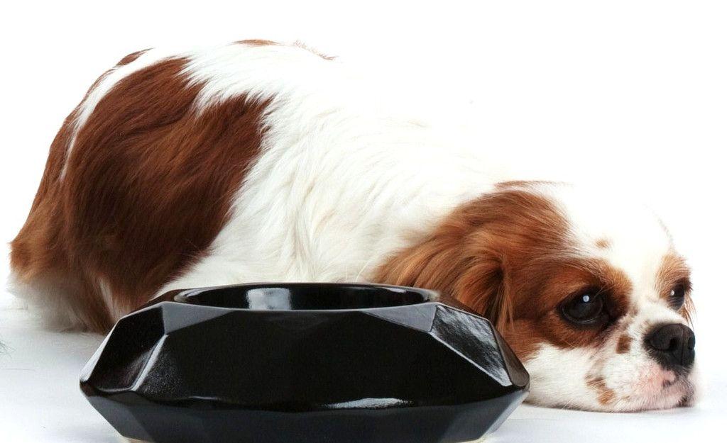 Depedi Diamond Ceramic Pet Bowl Inspired By The Elegance Of