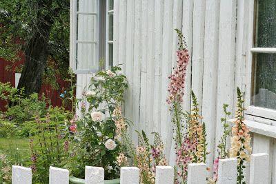 Roser og Patina: Litt hagebilder