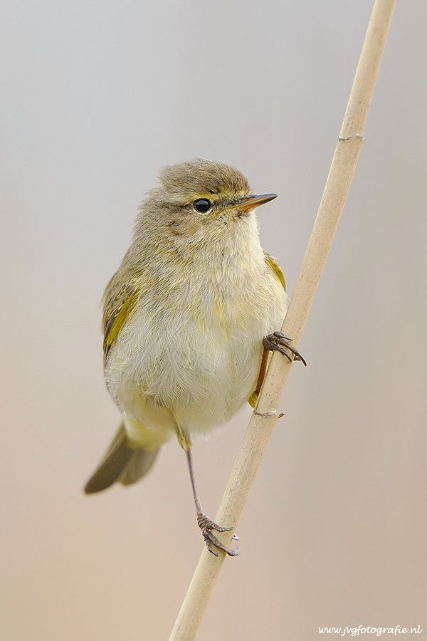Pin On Vogels In En Om De Tuin