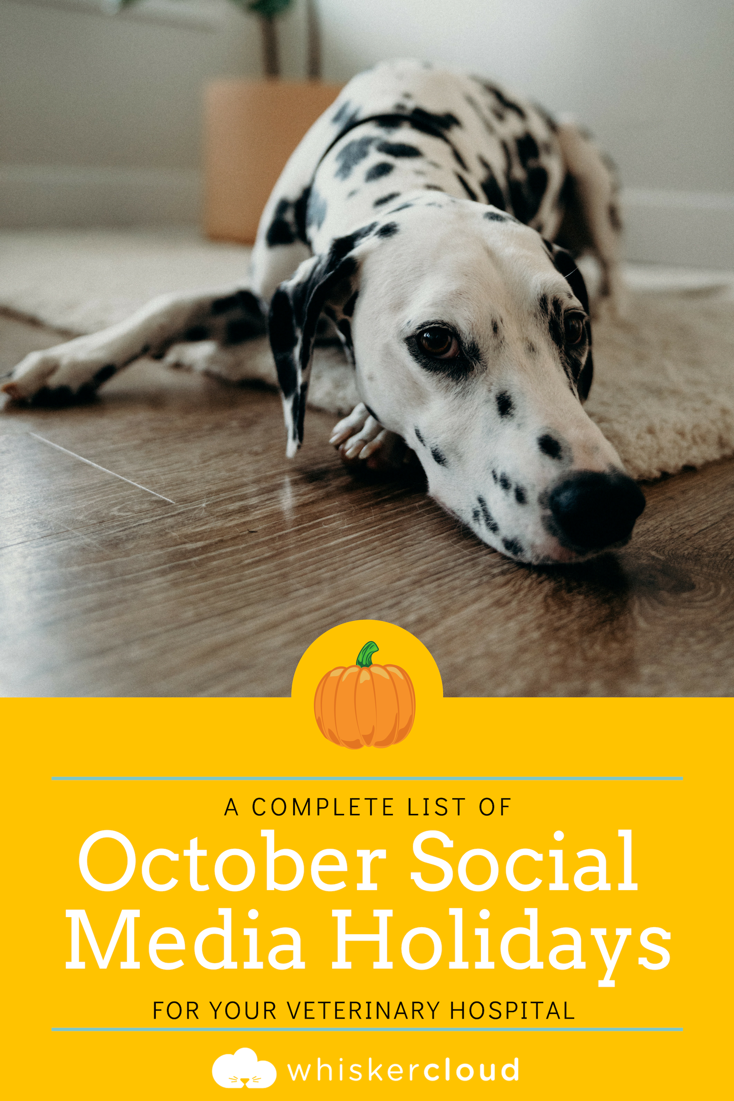 Complete List Of Social Media Holidays For Veterinary Hospitals
