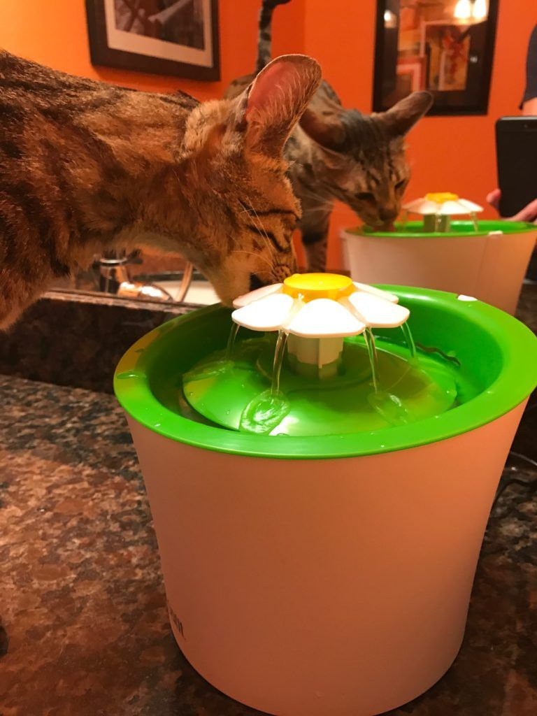 Catit flower fountain review with images modern cat